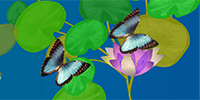 Be sentimental with flowers and butterflies with this birthday video ecard.